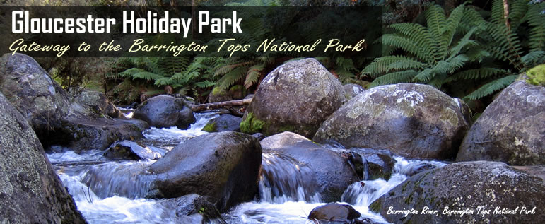 Gloucester Holiday Park, Cabins And Camping Holidays, Barrignton Tops National Park, Gloucester, NSW